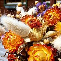 Многолетние сухоцветы – фото и названия [2019]