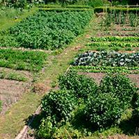 Как эффективно сажать растения