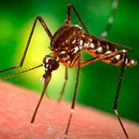как защищаться от комаров