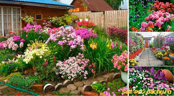 Какие цветы многолетники посадить на даче фото и название