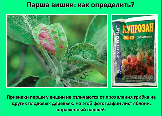 parsha-na-derevyah-foto-fotki