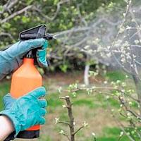 Как правильно опрыскивать деревья от вредителей