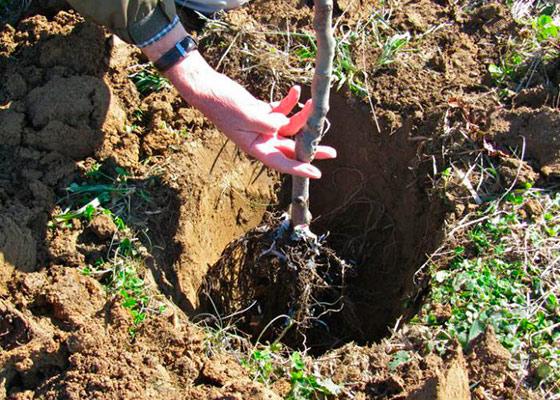 Глинистые почвы что сажать как 23