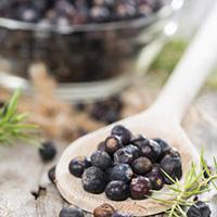Можжевельник лечебные свойства и рецепты народной медицины