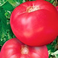 Томаты Розовые Щечки: описание характеристика и как выращивать