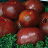 Черные томаты достоинства и недостатки экзотических сортов