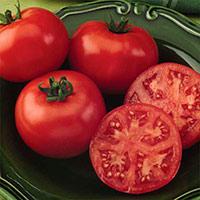 Томат король ранних характеристика и описание сорта урожайность с фото