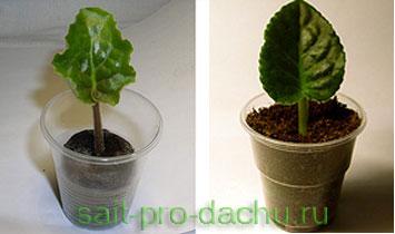 Торфоперегнойные таблетки Jiffy для размножения растений