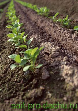 Научный подход к обработке почвы