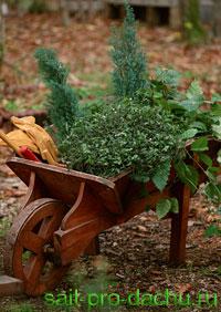Размножение растений черенкованием