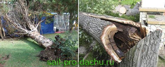 Удаление деревьев на даче