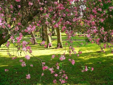 Уход за садом в мае