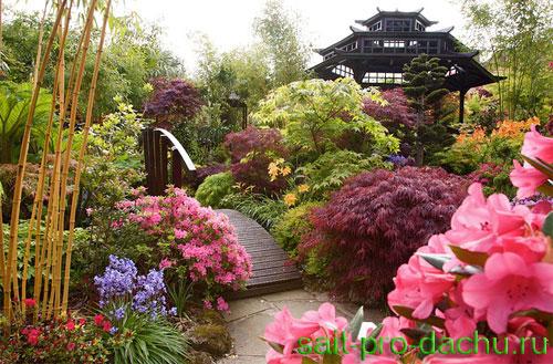 Цветок азалия уход содержание в саду