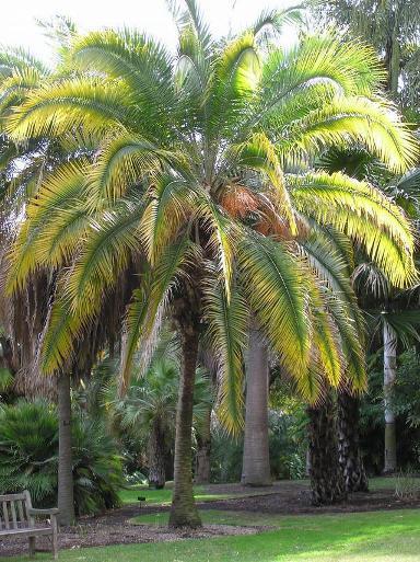 Пальма из дерева