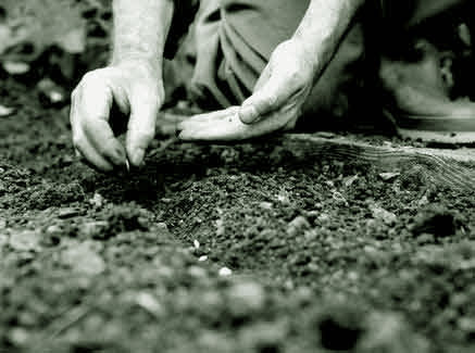 Способы посева семян