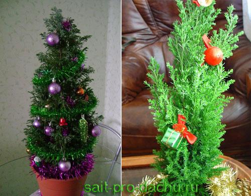 Что лучше купить на Новый Год: кипарис или елку?
