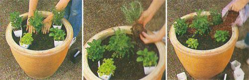 Как вырастить лекарственные растения дома