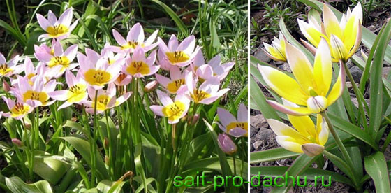 виды садовых цветов фото: