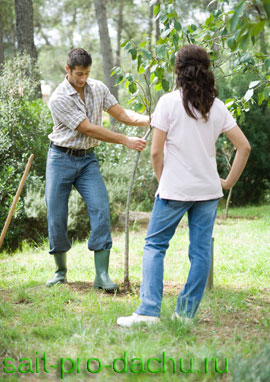 Легко ли быть садоводом?