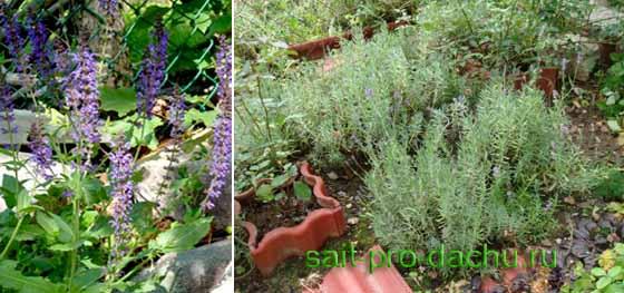 Взаимопомощь и самозащита растений в саду от болезней и вредителей