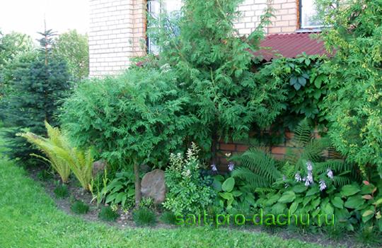Папоротники в вашем саду