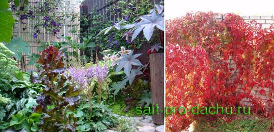 Нескучный сад цветники повсюду