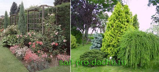 Места в саду любят хвойные растения