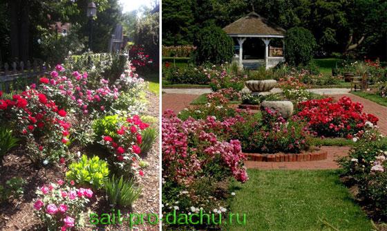 Сад одного цветка - розарий