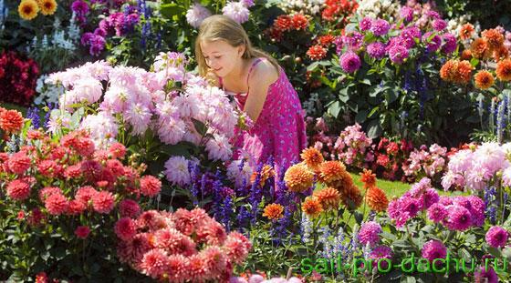 Сад одного цветка - сад георгинов