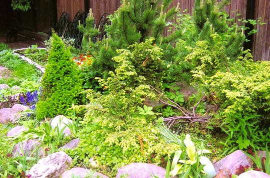 Растения для альпийской горки