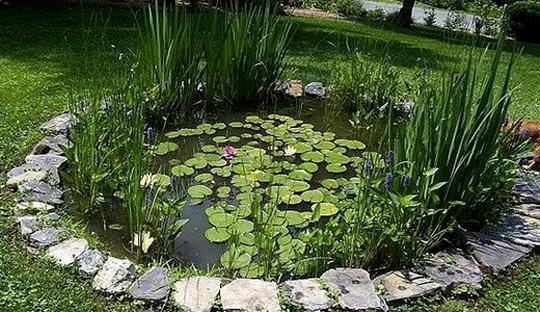 Растения водоема: уход и зимовка