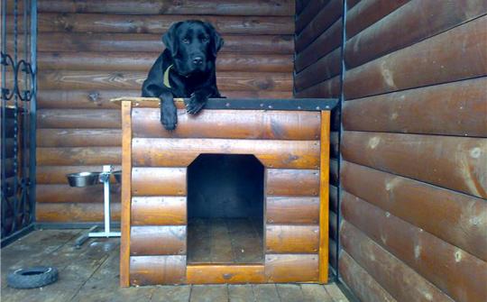 Вольер для собаки на дачном участке