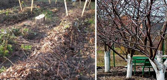 Зимняя защита и способы утепление растений
