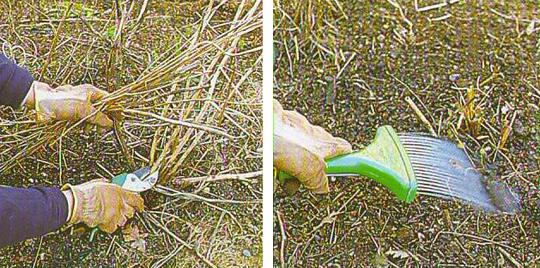 Зимняя защита растений