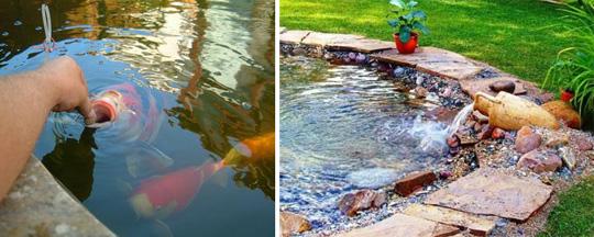 Разведение рыбы в садовом пруду
