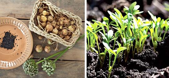 Подзимний посев семян