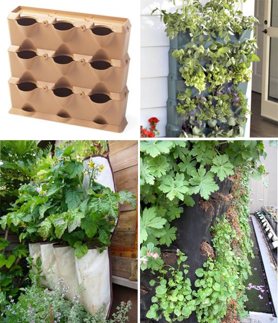Вертикальное озеленение: искусство покорения вершин