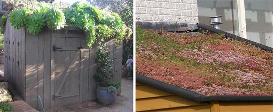Озеленение крыши своими руками