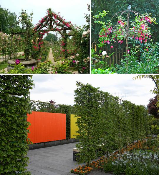 Вертикальное озеленение в вашем саду