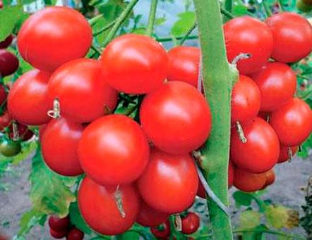Салаты в зиму из огурцов и помидоров