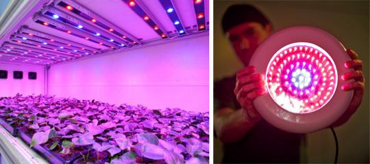 Освещение теплицы: выбираем лампы и светильники