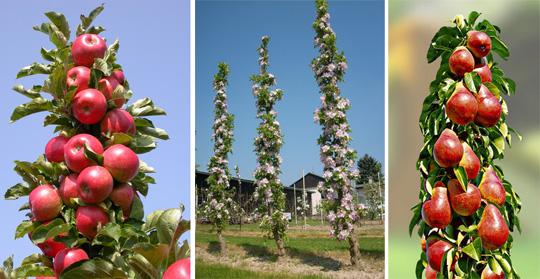 Как ускорить плодоношение: сорта и гибриды