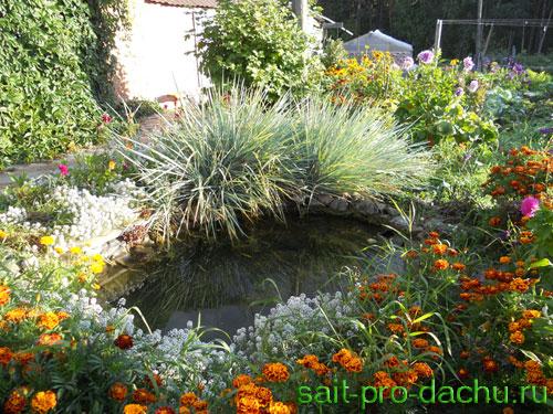 растения вогруг водоема