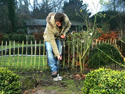 Как правильно сажать деревья