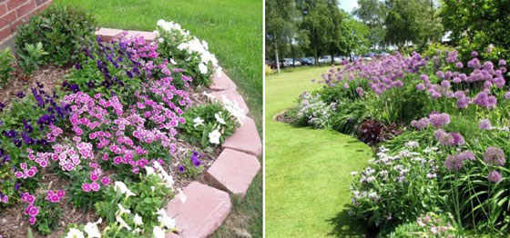 сочетание цветов в саду
