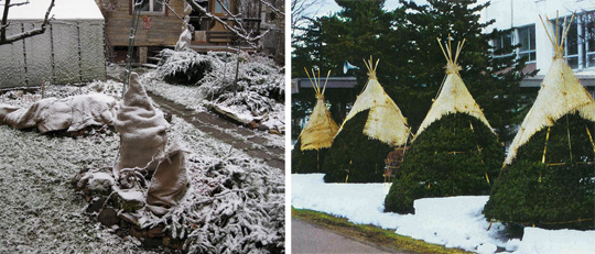 укрытие хвойных зимой