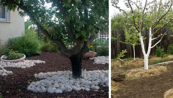 чем лучше мульчировать почву в саду