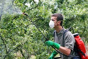 весенняя обработка яблонь от вредителей