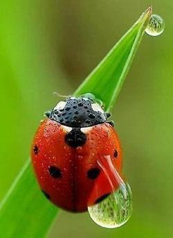 насекомые против тли