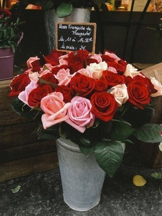 как из розы вырастить куст